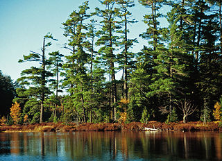national forest in Michigan, United States