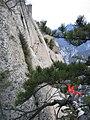 Pinus tabuliformis Hua Shan1.jpg
