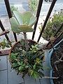 Plants 600.JPG