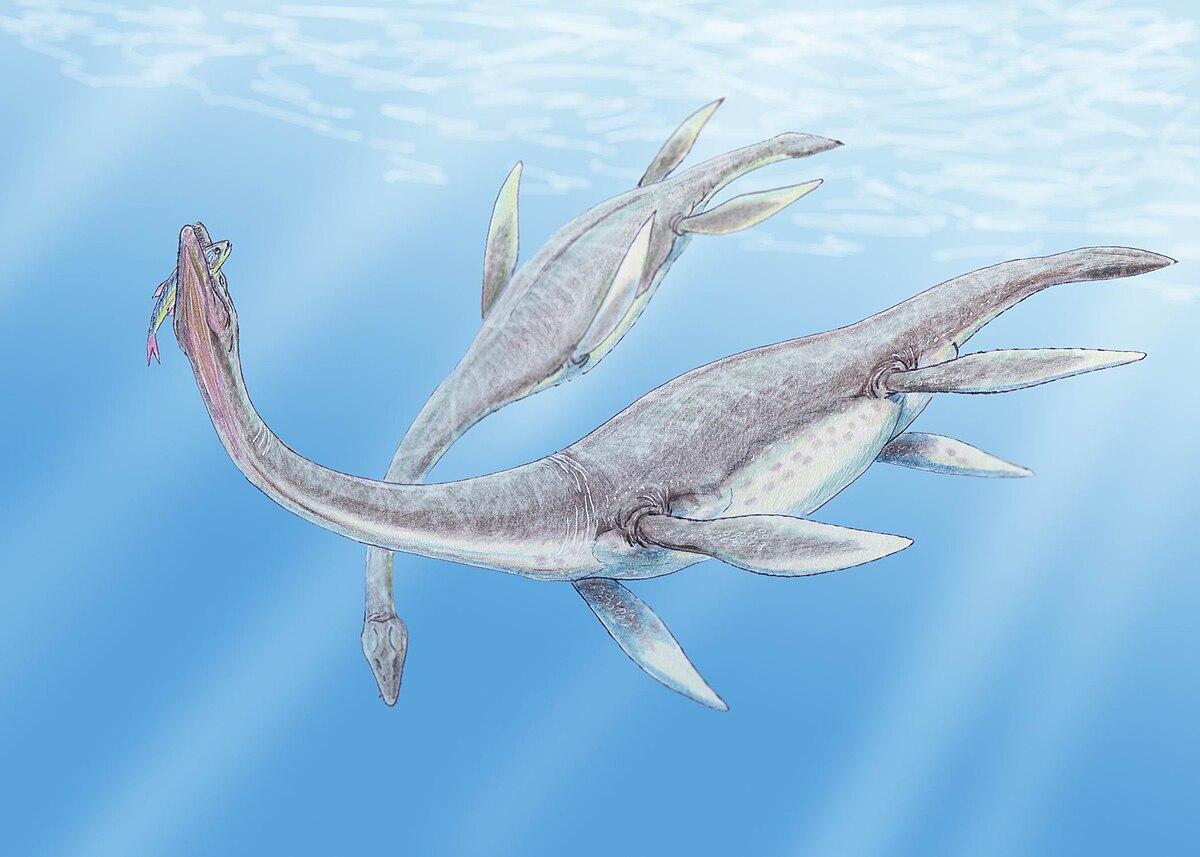 Plesiosaurus 3DB.jpg