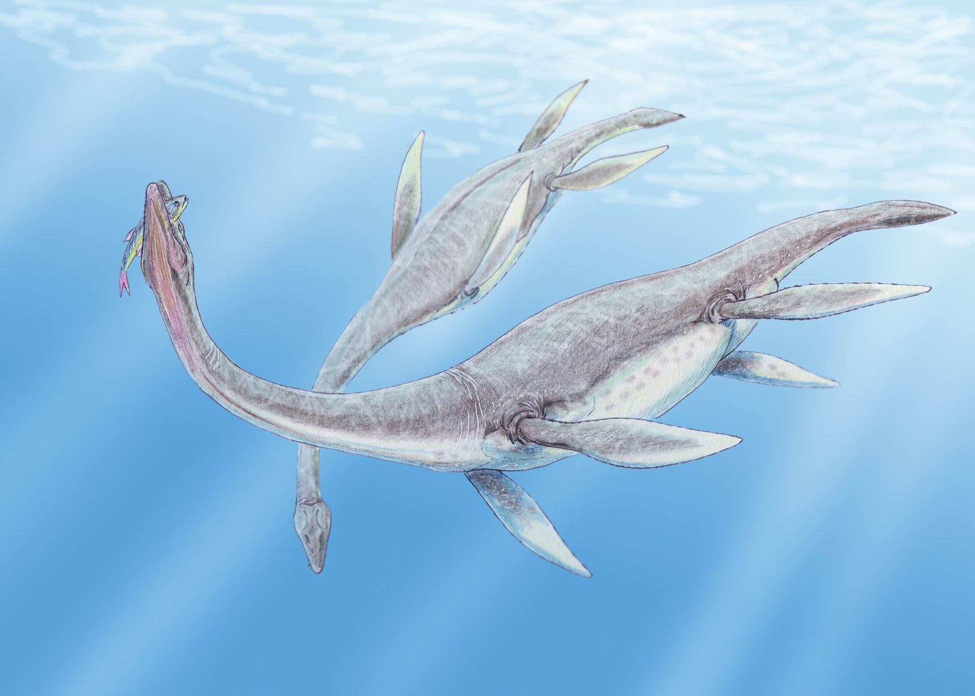 plesiosaures