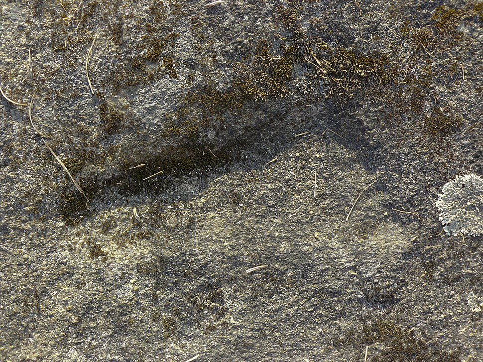 Podomorfo ferraduras