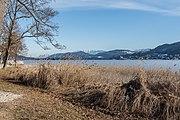 Poertschach Halbinsel Landspitz Schilfguertel und Maria Woerth-Blick 16022017 6301.jpg