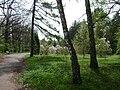 Poland. Warsaw. Powsin. Botanical Garden 052.jpg