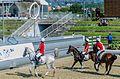 Ponte de Lima Horse.jpg
