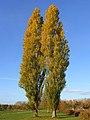 Poplars, Hurley - geograph.org.uk - 604043.jpg