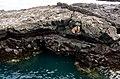 Precariosly Perched Sea Lion (6519194137).jpg