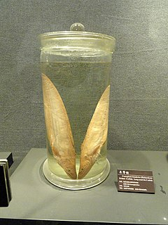 Preserved specimens - Kunming Natural History Museum of Zoology - DSC02403.JPG