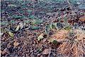 Prickly Pear CT Traprock.jpg
