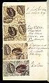 Printer's Sample Book, No. 19 Wood Colors Nov. 1882, 1882 (CH 18575281-21).jpg