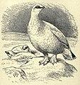 Ptarmigan EB1911 vol.12 p.637.jpg