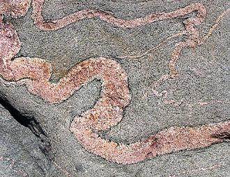 Migmatite - Ptygmatic folding in migmatite on Naissaar island, Estonia
