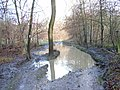 Puddle in Moor Wood - geograph.org.uk - 101547.jpg