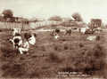 Queensland State Archives 2513 Handmilking at a dairy farm near Walloon c 1898.png