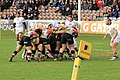 Quins start the driving maul (12560250823).jpg