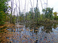 Réserve naturelle nationale de la petite Camargue alsacienne 0848.jpg