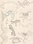 Résultats du voyage du S.Y. Belgica en 1897-1898-1899 - sous le commandement de A. de Gerlache de Gomery. Rapports scientifiques publiés aux frais du gouvernement belge, sous la direction de la (14577535787).jpg