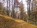 RO BV Forest 3.jpg