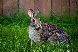 RabbitMilwaukee.jpg