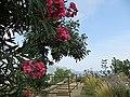 Ravello - panoramio (7).jpg