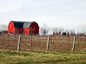 Vintners Quality Alliance - An Ontario vineyard in the Niagara Peninsula regional appellation.