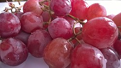 Red grapes1.jpg