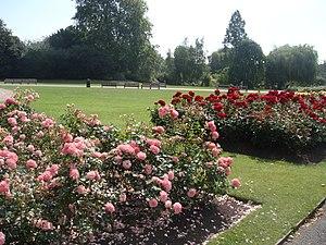 Queen Mary's Gardens, Regent's Park, London