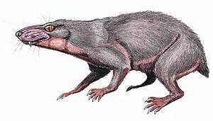 Baurioidea - Life restoration of Regisaurus jacobi