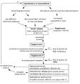 Renin angiotensin aldosterone system.png