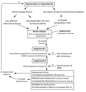 Renin–angiotensin system - Flowchart showing the clinical effects of RAAS activity and the sites of action of ACE inhibitors and angiotensin receptor blockers.