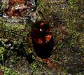Resin drop - Flickr - S. Rae.jpg
