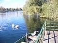 Rheinufer bei Sasbach - geo.hlipp.de - 22628.jpg