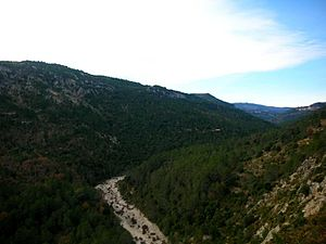 Serra del Turmell - View of the wooded northern slopes of the range and the Cervol River