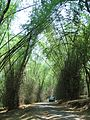 Road Through Bamboo Forest 2.jpg