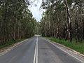 Road thru Australian bush at Noosa North Shore 2015.JPG
