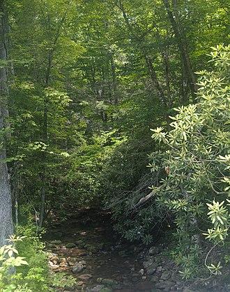 Beartown Wilderness - Roaring Fork at Lick Creek Road