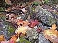 Rocks and Leaves (4977360684).jpg