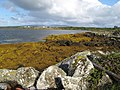 Rocks and seaweed - geograph.org.uk - 1588780.jpg