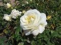 Rosa Chopin 2018-07-16 6275.jpg