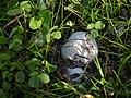 Round Mushroom (6).jpg