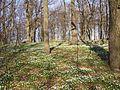 Sæby, den 24 april 2008, billede 64.jpg