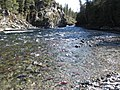 Salmon run at Adams River 2010 (5074658692).jpg