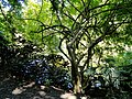 San Juan Botanical Garden - DSC07009.JPG