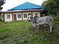 SantaTeresita,Batangasjf1811 27.JPG
