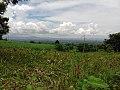 Scenery from Mt. Isarog, Pili Trail.jpg