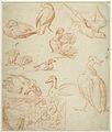 Schetsen van een compositie en verschillende vogels.jpeg