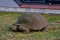 Schildkröte (Bernhard Bührer) jm88155.jpg