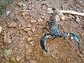 Scorpion (14).jpg