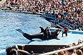 SeaWorld, San Diego - panoramio.jpg