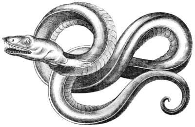 Sea Serpent after Owen 1741 (transparent).png